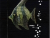 kennedycentergreenfish