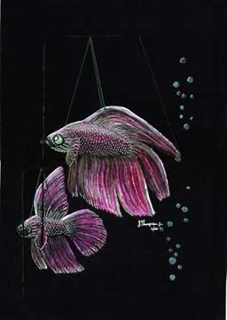redfishillustration